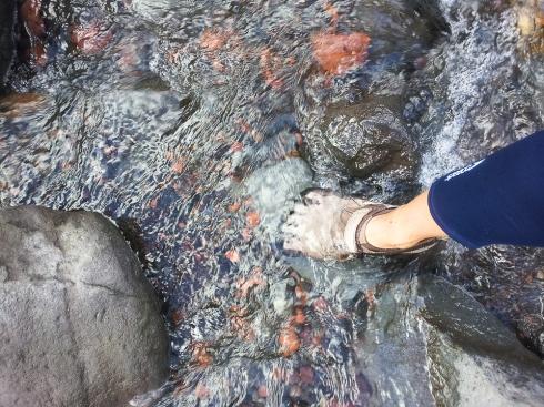 Wilkies Pools, Mt. Taranaki
